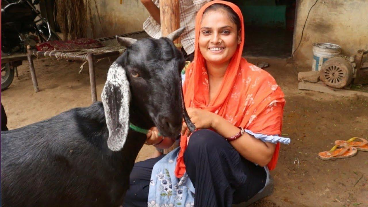 Bewafa Tera Masoom Chehra    गांव की लड़की की आवाज सुनकर आप भी रह जाओगे हैरान  Farmani Ashu bachchan