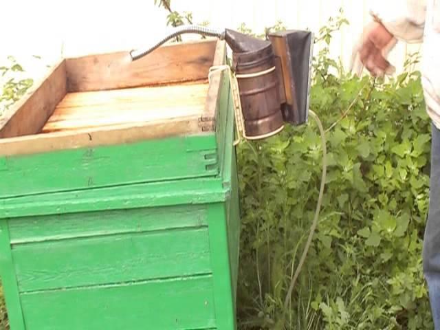Жопу большими самодел пчеловод ру видео лижут