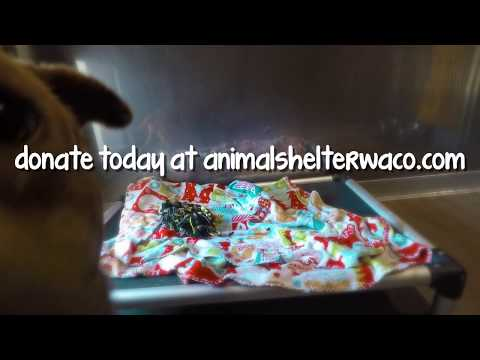 donate-a-shelter-bed-to-the-animal-shelter-in-waco!