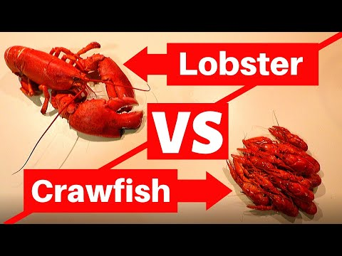 Maine Lobster Vs. Crawfish Taste Testing! (Which Is Better?)
