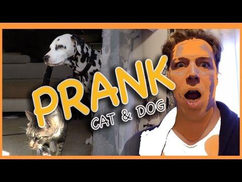 Funny Cat & Dalmatian Dog prank - FAIL - Who hits the saran wrap?