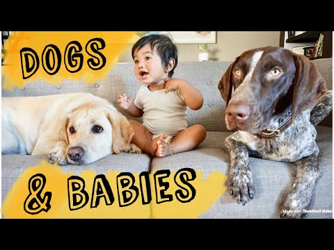 Dogs meet baby for the first time!