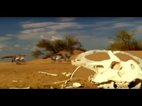 DINOSAUR PLAGUE - NOVA DOCUMENTARY - History Discovery Dinosaurs (full documentary)