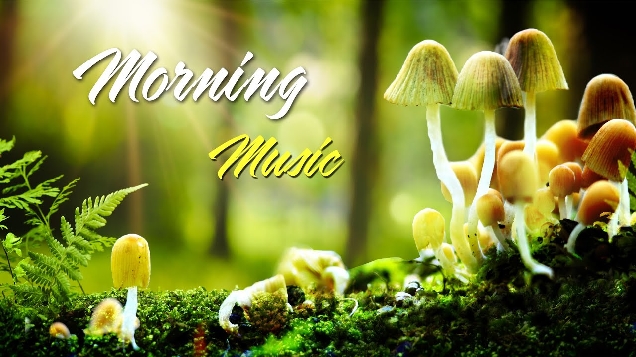 Morning Relaxing Music - Piano Music with Birds Singing For Positive Feelings and Energy