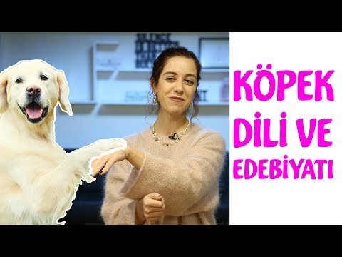 Köpek Dili ve Edebiyatı - Köpeklerde Beden Dili Nasıldır?