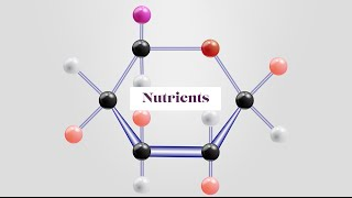 Fundamentals of Nutrients and the History of Nutrition