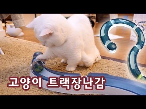 고양이 데굴데굴 트랙 장난감 Cat Toy - Play Circuit