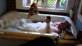 Steve, the cat, falls in the bathtub