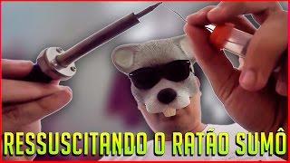 RESSUSCITANDO O RATÃO GORDÃO   VlogRatoso.49