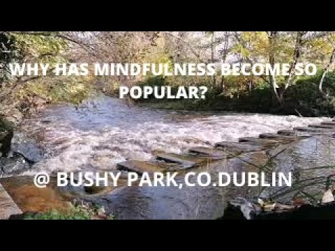 Why Has Mindfulness Become So Popular?Stepping Stones @ Bushy Park, Terenure. Dublin