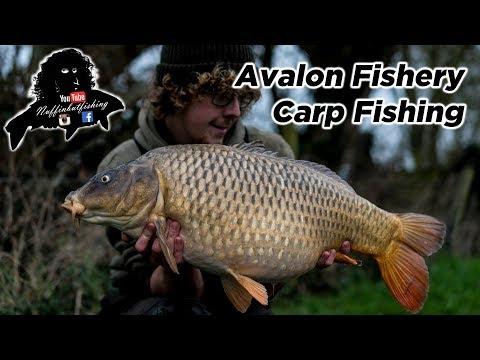 Avalon Fishery Carp Fishing