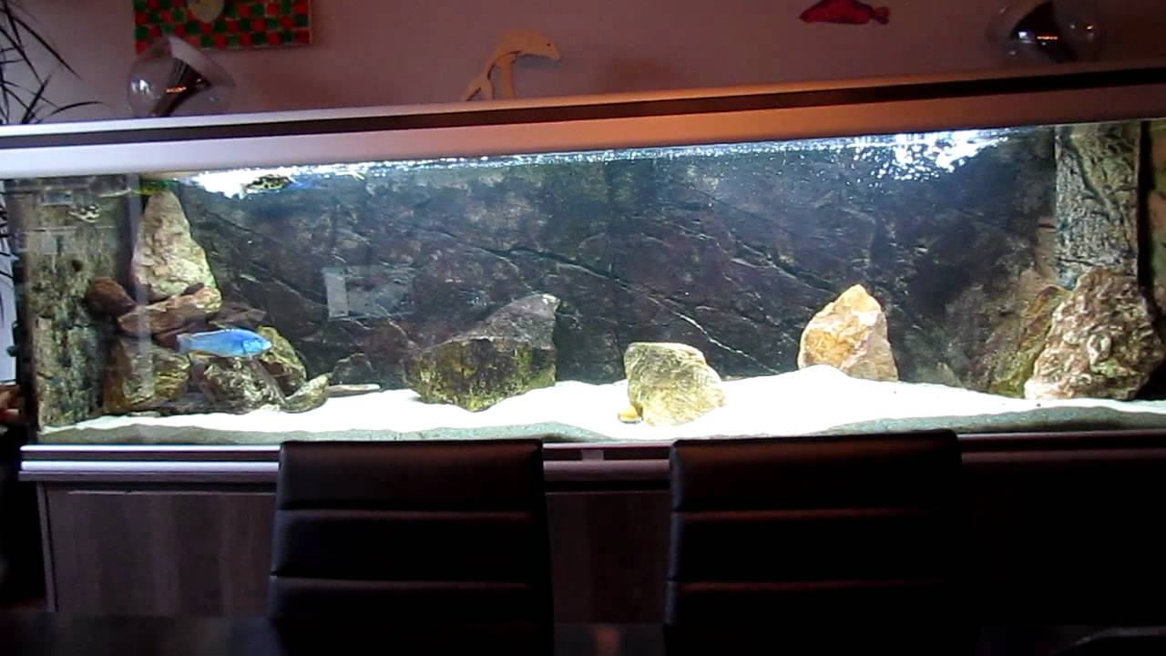 2 meter aquarium 18 02 2012 youtube for Wohnwand 2 50 m