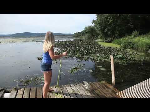 Pond Weed Rake | Aquatic Weedraker