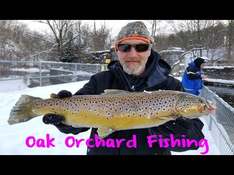 Oak Orchard Steelhead And Trout Fishing