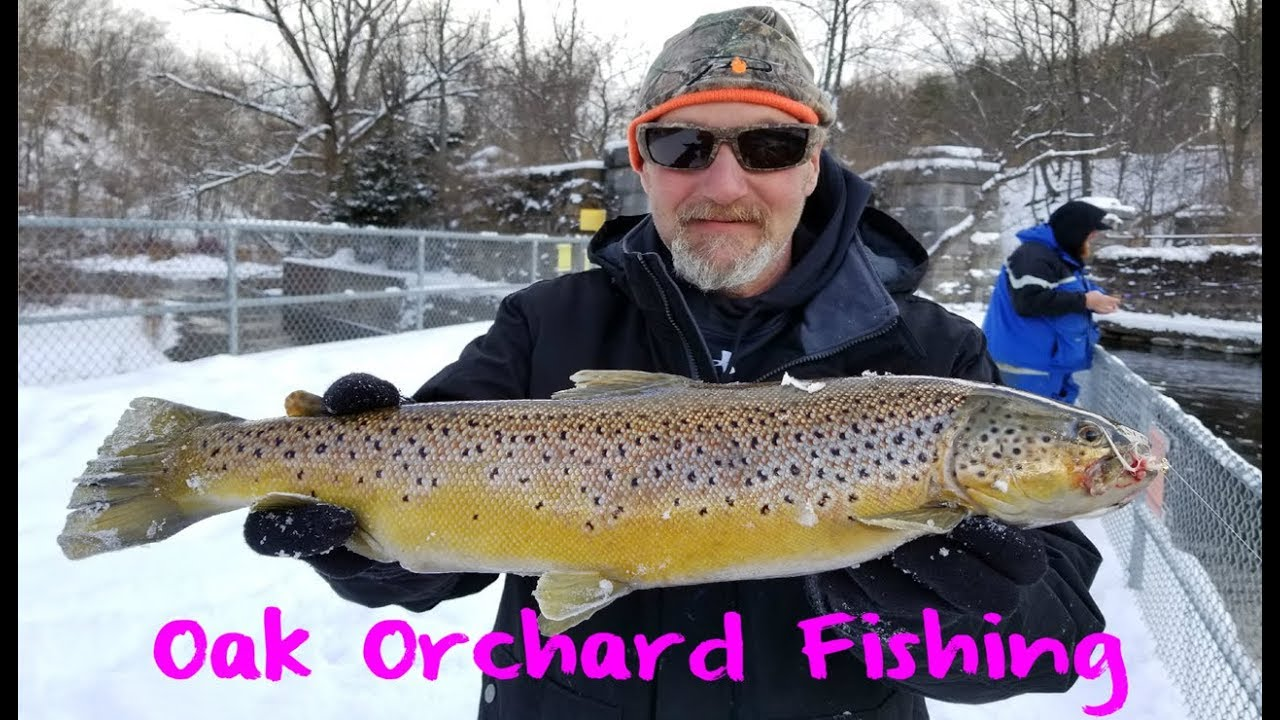 Oak orchard steelhead and trout fishing youtube for Oak orchard fishing report