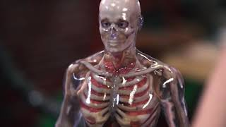 Inside Adam Savage's Cave Human Anatomy Color 3D Printed Model with Miamki 3DUJ-553