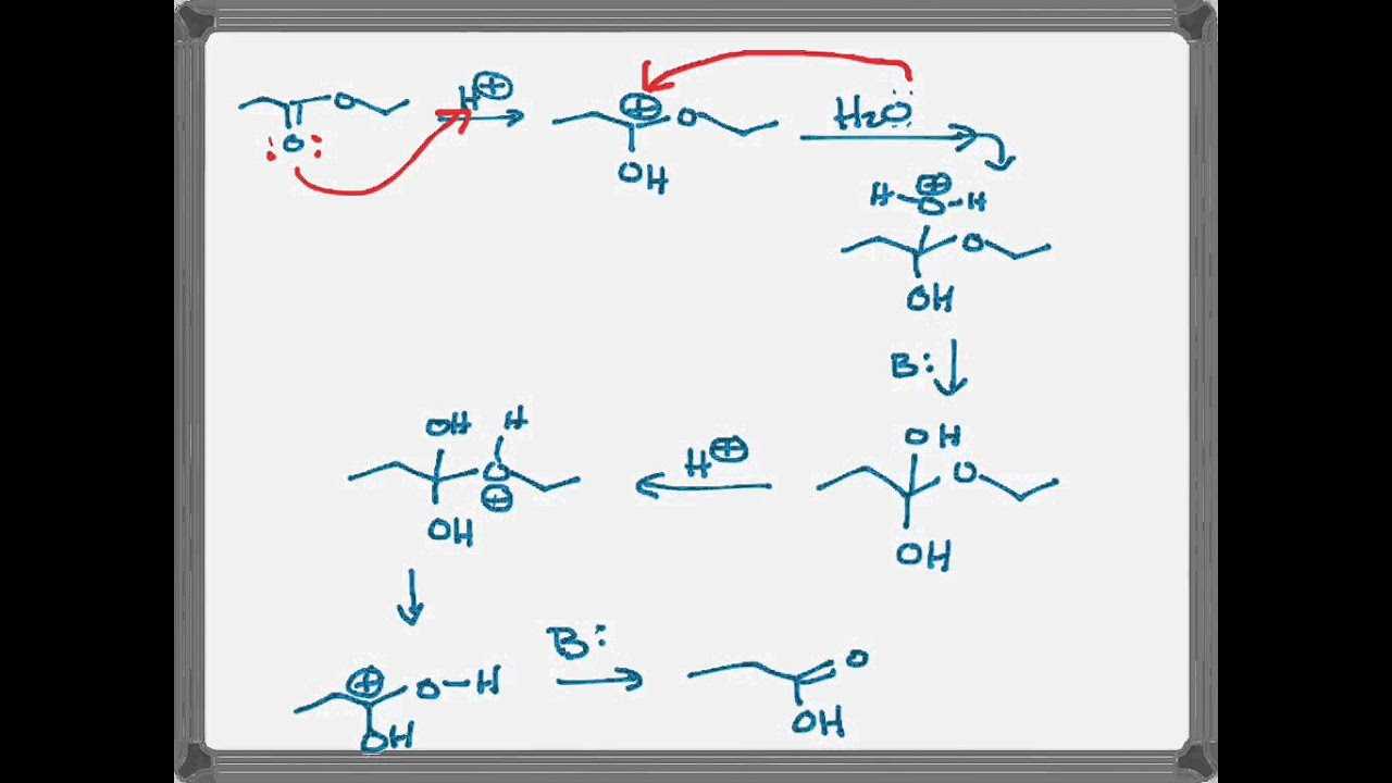 acid catalyzed hydrolysis of ester - YouTube