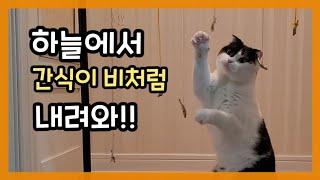 런닝맨처럼 미션으로 간식 먹기를 했을 때 고양이의 반응…