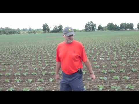 Meet The Growers - Visser Farms