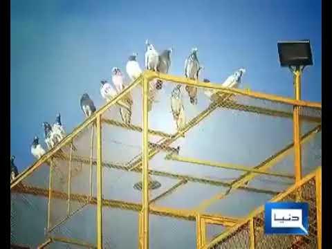 Kabootar Bazi in Rawalpindi.....کبوتر بازی راولپنڈی