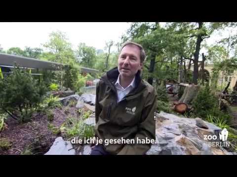 Stippvisite des Zoo-Direktors im Panda Garden