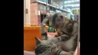 Смешное видео-кошки. Массаж любят даже животные