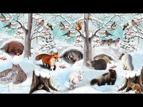 Как животные в лесу готовятся к зиме