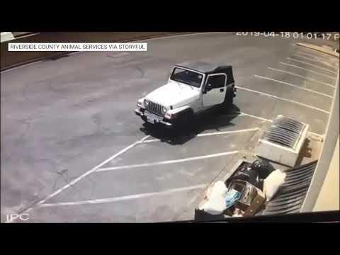 Crueldad animal: una mujer tiró perritos a la basura