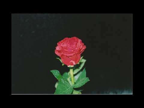 BUGSEED - FLOWERS Mp3