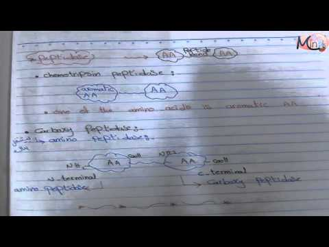 Enzymes 5