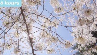 Relaxing Music: Stress Relief, Meditation, Study, Sleep, Beautiful Nature | Piano Instrumental ★58