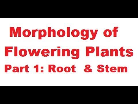 Morphology of Flowering Plants | NEET | Crash Course | Class 11