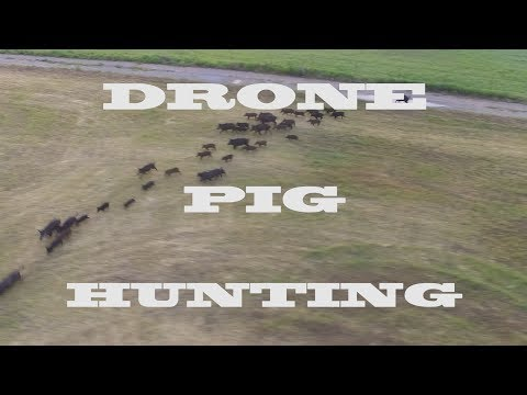 Drone Hog Hunting a herd of wild pigs