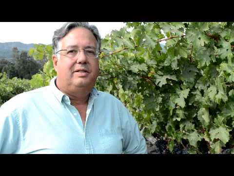 Frank Leeds describes Harvest 2012 in St. Helena, CA
