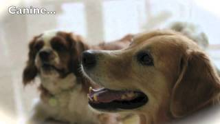 A Dog With C.l.a.s.s. - Canine Life And Social Skills