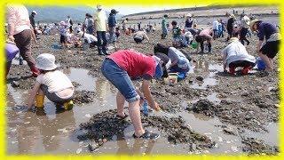 Как японцы собирают ракушки в море ╰(*´︶`*)╯Японская еда