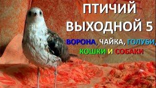 Птичий выходной 5 (ВОРОНА, ЧАЙКА, ГОЛУБИ, КОШКИ И СОБАКИ)