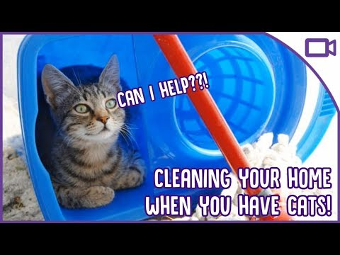 How to Keep Your House Clean When You Have a Cat!