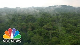 Saving Our Planet: What's Happening In The Amazon? | NBC News
