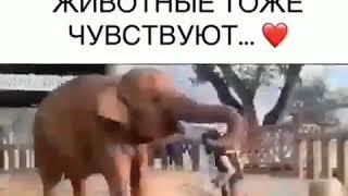 Все  животные тоже чувствуют