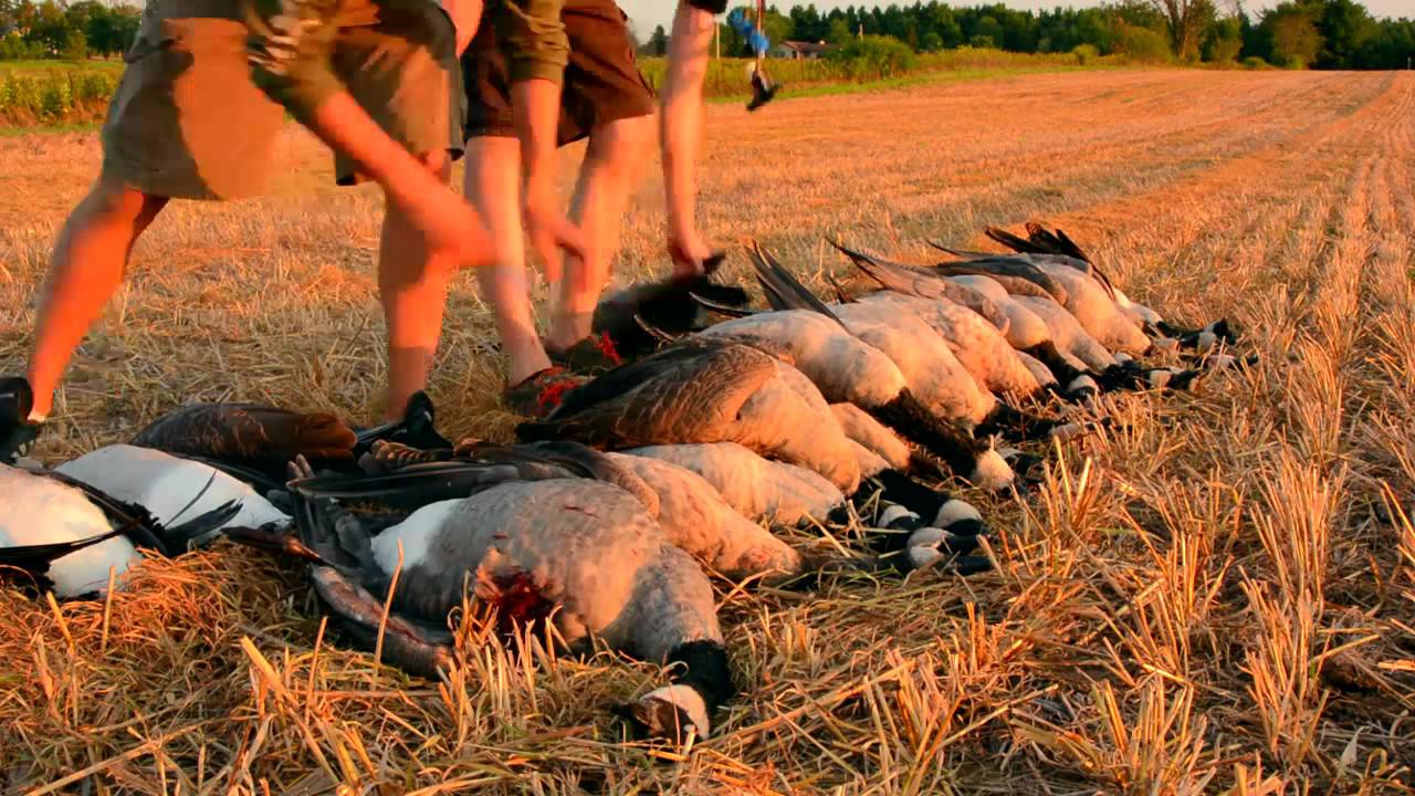Wisconsin goose hunting cabela 39 s northern flight youtube for Wisconsin out of state fishing license