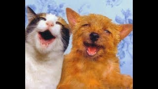 Смешные собаки и милые котики | Лучшая подборка приколов про кошек и собак