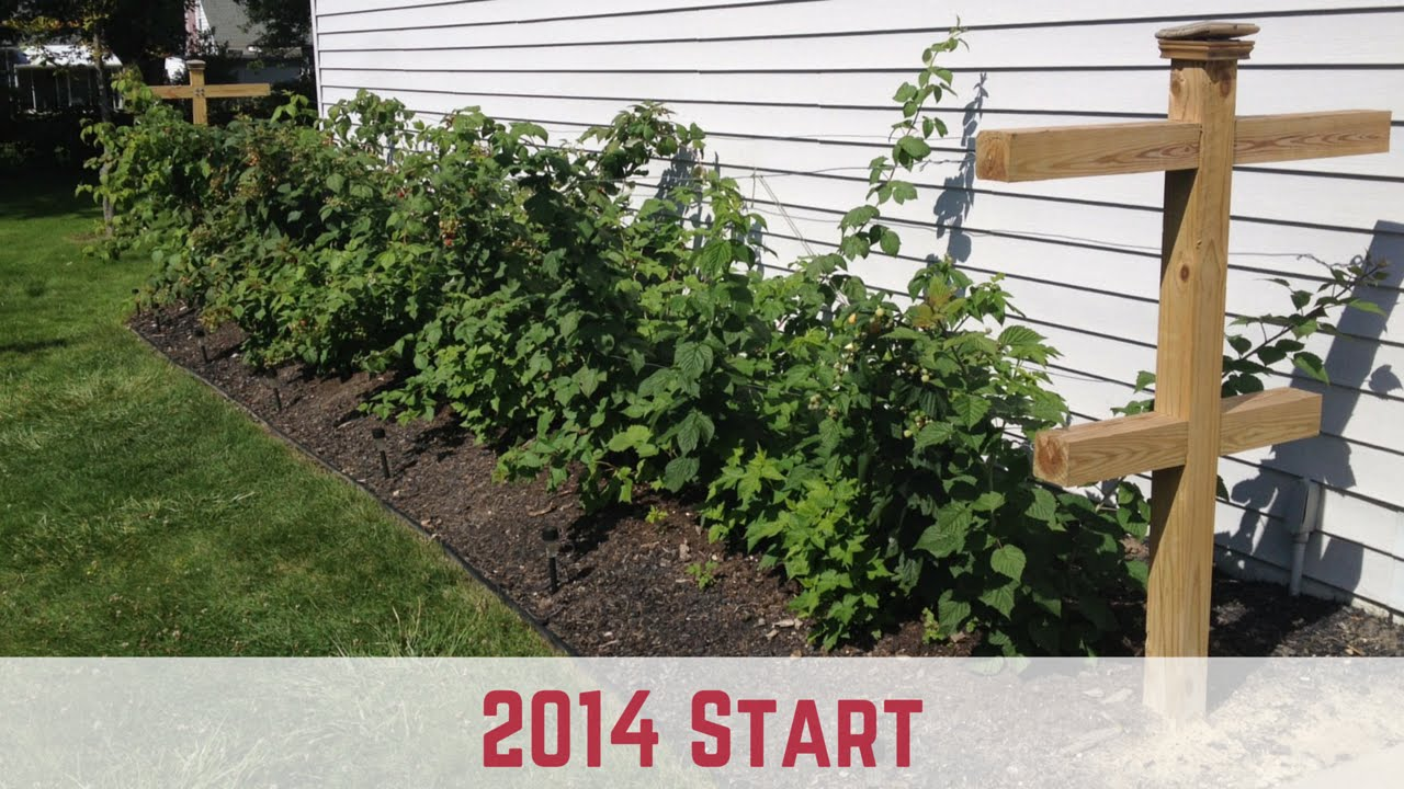 How To Start Growing Raspberries 2014 Start Youtube