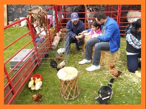 Granja didactica la vaca loca fiestas a domicilio for Como hacer una granja de peces