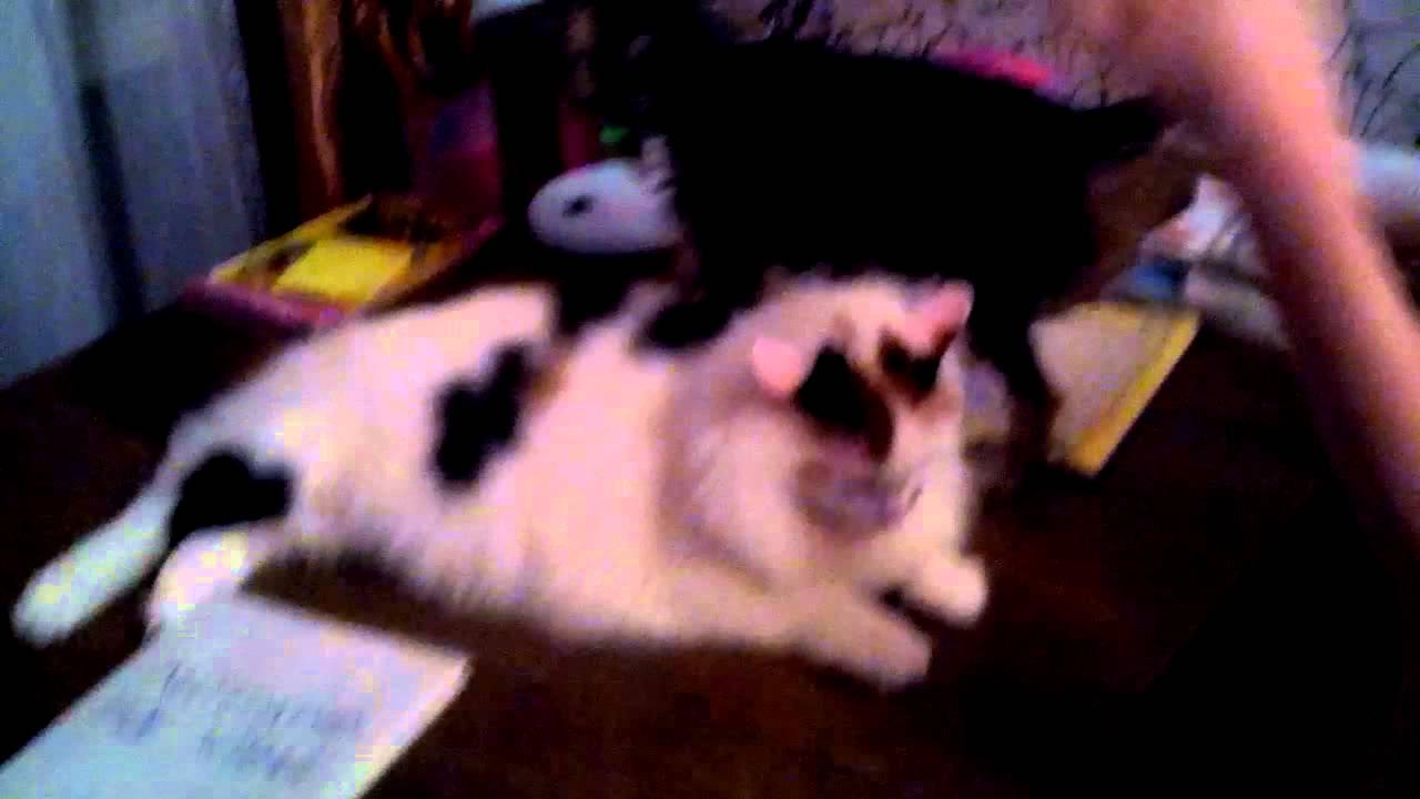 "Кошка и собака джой"" - YouTube"