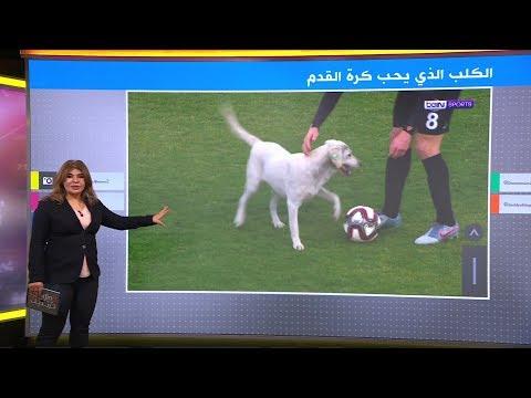 كلب يشارك في مباراة بالدوري التركي لكرة القدم  - 18:59-2020 / 2 / 19