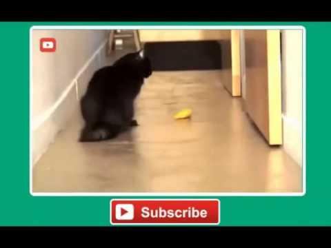 Katzen Backe Backe Kuchen Youtube