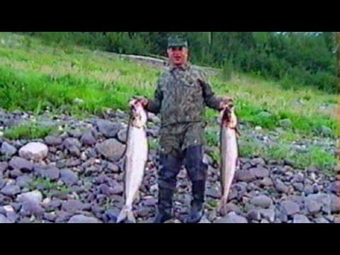 Заполярье  Рыба белая  Нельма