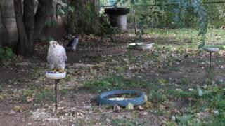 В питомнике хищных птиц заповедника «Галичья гора»