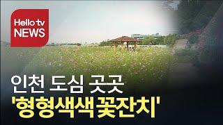 인천 곳곳 이른 가을 ′형형색색 꽃잔치′